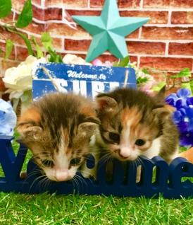 4月20日頃に生まれた子猫2匹です♬