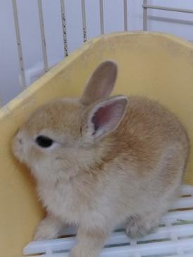 ミニウサギ(ペッツマックス唐津店)