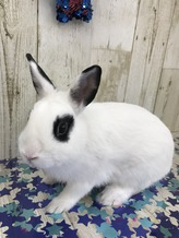 ミニウサギ(わんわん)